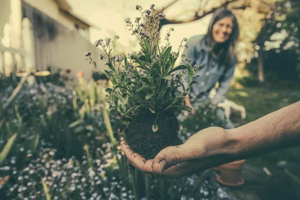 gardening improves family relationship